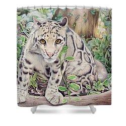 Hidden In Plain Sight - Clouded Leopard Shower Curtain