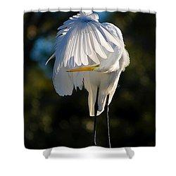 Hidden Shower Curtain by Joan McCool