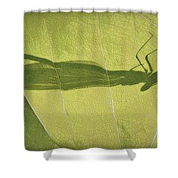 Hide And Seek Dragon..fly  Shower Curtain by Tammy Schneider