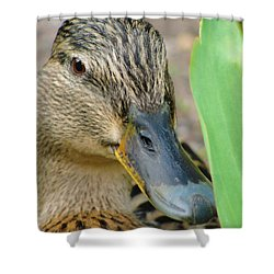 Hide And Seek Shower Curtain by Tiffany Erdman