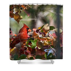 Hiding Away Shower Curtain by Linda Unger