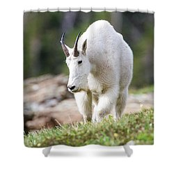 Shower Curtain featuring the photograph High Country Mountain Goat by Jack Bell