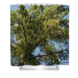 High Pine Shower Curtain by Joseph Yarbrough