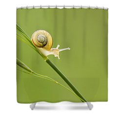 High Speed Snail Shower Curtain by Mircea Costina Photography