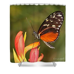 High Upon A Flower Shower Curtain by Ruth Jolly