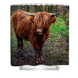 Highland Beast  Shower Curtain by Adrian Evans