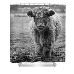 Highland Calf Shower Curtain by Sonya Lang