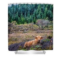 Highland Cow Shower Curtain by Adrian Evans