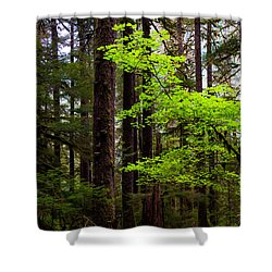 Highlight Shower Curtain by Chad Dutson