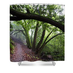 Hiking Huckleberry Shower Curtain by Hugh Stickney