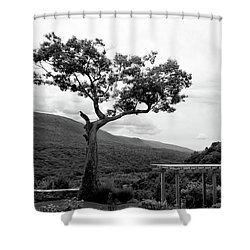Hildene Tree 5689 Shower Curtain