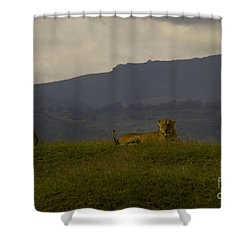 Shower Curtain featuring the photograph Hillside Lions by J L Woody Wooden