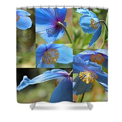 Himalayan Blue Poppy Collage Shower Curtain by Jennie Marie Schell