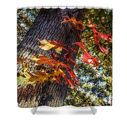 Hints Of Fall Shower Curtain by Linda Unger