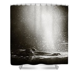 Hippo Blowing  Air Shower Curtain