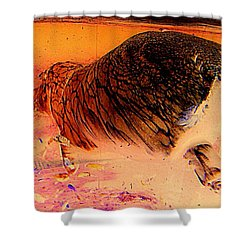 Shower Curtain featuring the photograph Hippo Elegance by Antonia Citrino