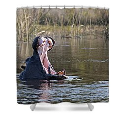 Shower Curtain featuring the photograph Hippo Yawning by Liz Leyden