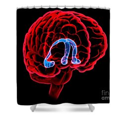 Hippocampus And Fornix Shower Curtain by Evan Oto
