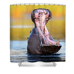 Hippopotamus Displaying Aggressive Behavior Shower Curtain by Johan Swanepoel