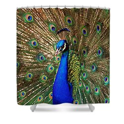 Shower Curtain featuring the photograph His Majesty by Geraldine DeBoer