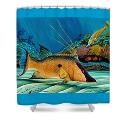 Hog And Filefish Shower Curtain