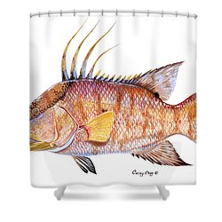 Hog Fish Shower Curtain by Carey Chen