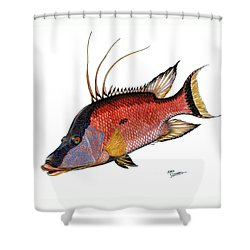 Shower Curtain featuring the painting Hogfish On White by Steve Ozment