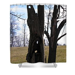 Shower Curtain featuring the photograph Holey Tree Trunk by Nick Kirby