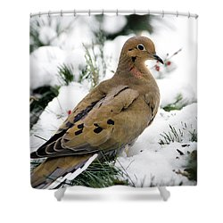Holiday Dove Shower Curtain by Christina Rollo