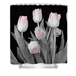 Shower Curtain featuring the photograph Holland Tulips In Black And White With Pink by Jeannie Rhode