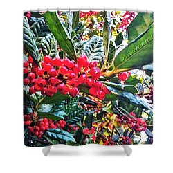 Holly Berries In The Sun Shower Curtain
