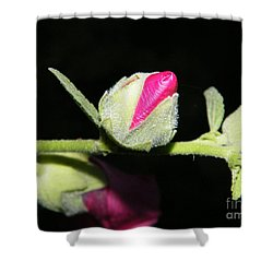 Shower Curtain featuring the photograph Hollyhock Buds by Ann E Robson