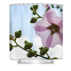 Hollyhock With Raindrops Shower Curtain by Lana Enderle
