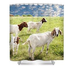 Homeward Bound Shower Curtain by Amy Tyler