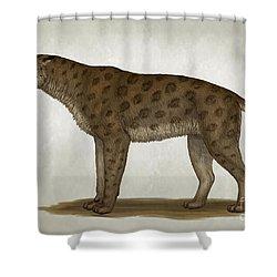 Homotherium Latidens, A Big Sabertooth Shower Curtain by Heraldo Mussolini