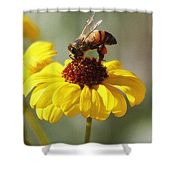 Honey Bee And Brittle Bush Flower Shower Curtain by Tom Janca