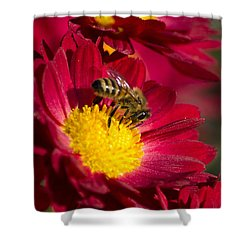 Honey Bee And Chrysanthemum Shower Curtain by Christina Rollo