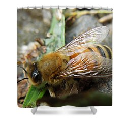 Shower Curtain featuring the photograph Honey Bee by Pete Trenholm