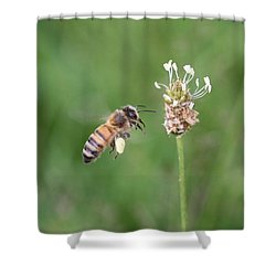 Honeybee And English Plantain Shower Curtain by Lucinda VanVleck
