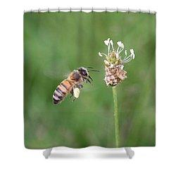 Honeybee And English Plantain Shower Curtain