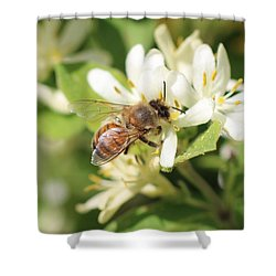 Honeybee And Honeysuckle Shower Curtain by Lucinda VanVleck
