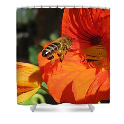 Honeybee Entering Nasturtium Shower Curtain by Lucinda VanVleck