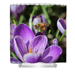 Honeybee Flying Over Crocus Shower Curtain by Lucinda VanVleck