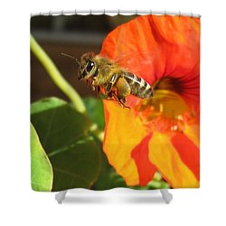 Honeybee Leaving Nasturtium With A Full Pollen Basket Shower Curtain by Lucinda VanVleck