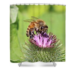 Honeybee On Burdock Shower Curtain by Lucinda VanVleck