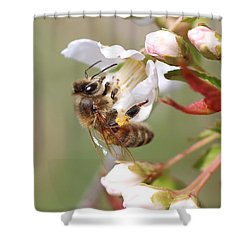 Honeybee On Cherry Blossom Shower Curtain by Lucinda VanVleck