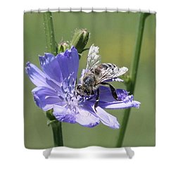 honeybee on Chickory Shower Curtain by Lucinda VanVleck