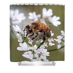 Honeybee On Cilantro Shower Curtain by Lucinda VanVleck