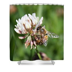 Honeybee On Clover Shower Curtain by Lucinda VanVleck