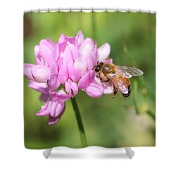 Honeybee On Crown Vetch Shower Curtain by Lucinda VanVleck